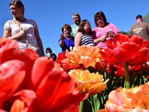 올버니 튤립 페스티벌 동안 다채로운 꽃을 구경하는 여행자