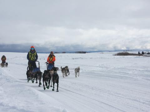 아이다호주 아메리칸 도그 더비 개썰매 경주 참가자들